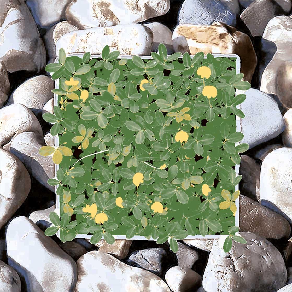 Gạch lát sân vườn 400x400 Viglacera GF494 giá rẻ